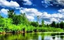 Смотри, как роща зеленеет, Палящим солнцем облита.                                    Тютчев Ф.
