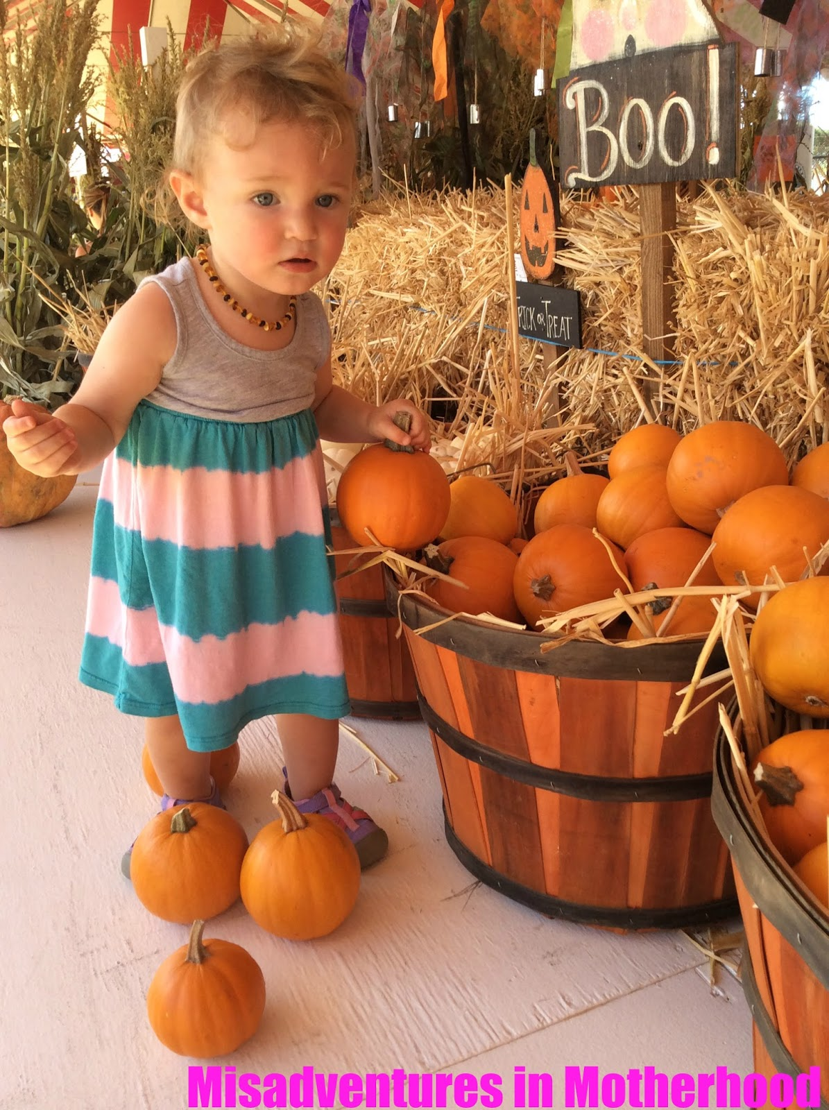 pumpkin patch los angeles