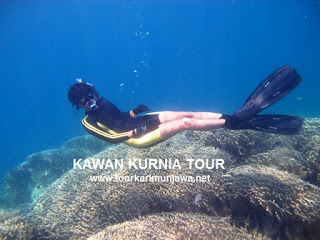 tour tahun baru Karimunjawa 2014