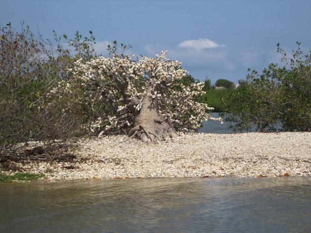 Árbol de ofrendas en La Somone, Senegal