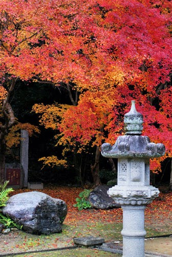 Full fall colors in a Japanese shrine