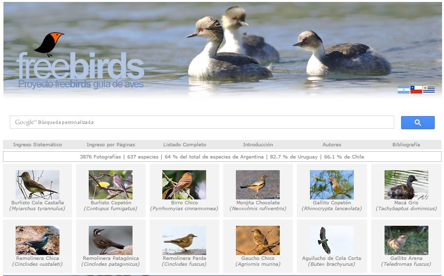 Proyecto Freebirds