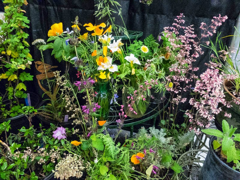 Going Wild In The Cnps Booth At The 2015 San Francisco Flower And Garden Show