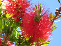 Bottle Brush and Spring