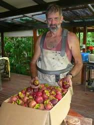 Peluang Bisnis Buah Manggi, buah manggis, pohon manggis, tanaman manggis, budidaya manggis, manfaat kulit manggis, manfaat buah manggis