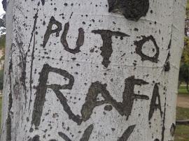 Sobre un árbol escribí tu nombre