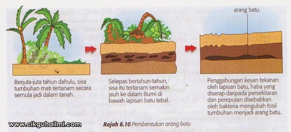 Pembentukan arang batu
