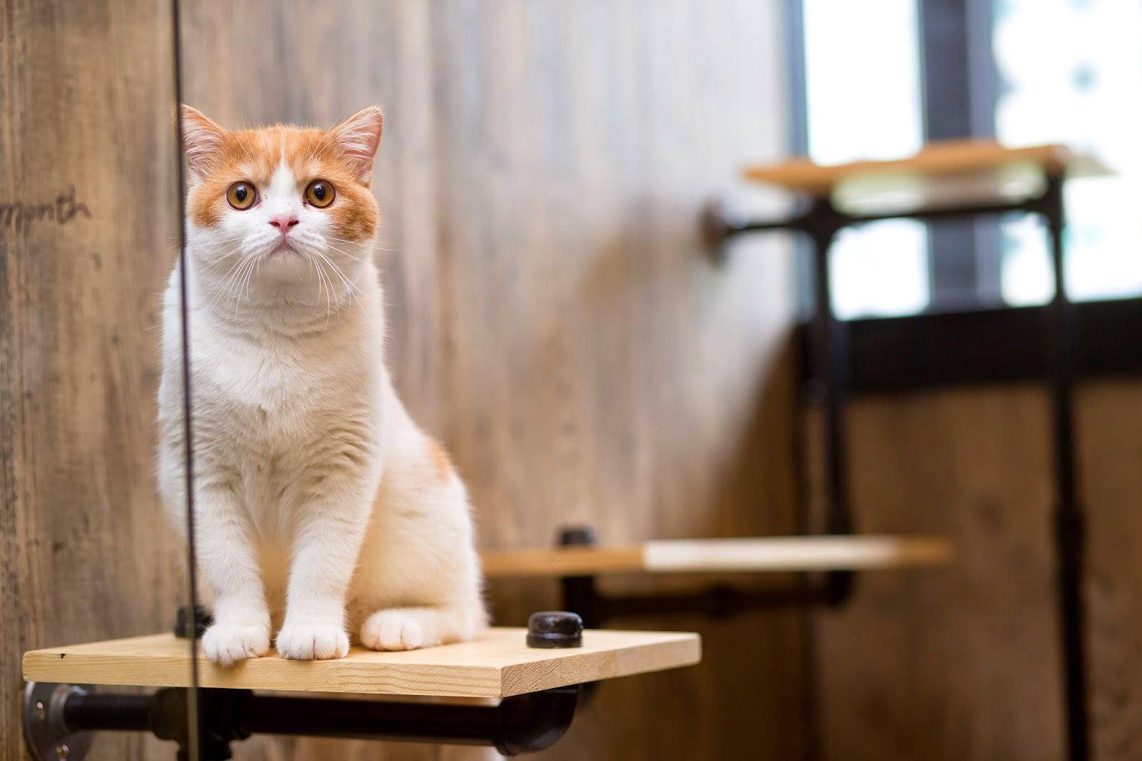 貓工寓|貓咪住宿|寵物攝影