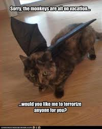 Trendystyle Cat Funny Pics With Funny Captions