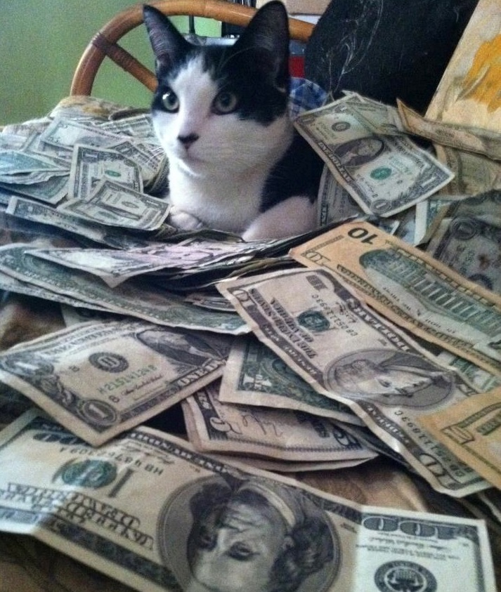 Cats And Money Tumblr More Cats And Money Older Cats
