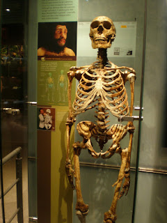 Evolution is a Lie - Intelligent Design is the Truth! Neanderthal-skeleton