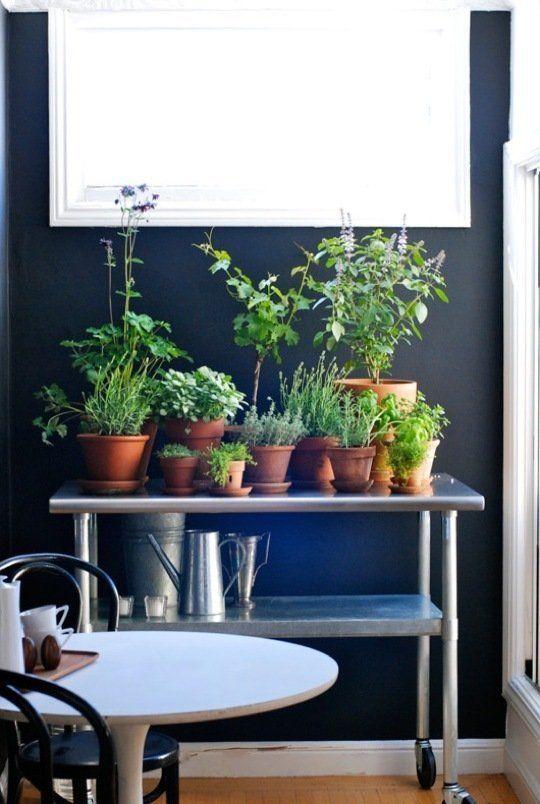 Planter, krydderurter, blomster og lerpotter på et stål rullebord