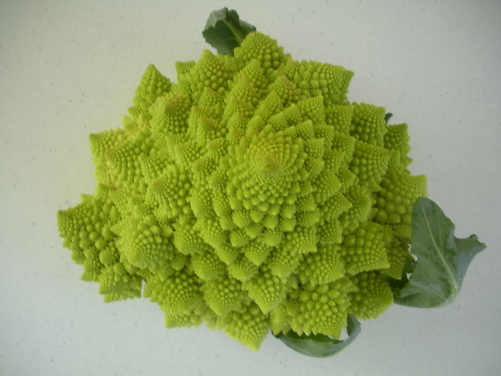 Yarn In, Yarn Out: Fibonacci Had a Farm