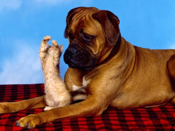 Funny Animal HD Wallpapers Free Download   Lovely Wallpapers 4u