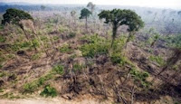 destruction of Brazil's rainforests (Credit: Antonio Scorza / Getty Images) Click to Enlarge.