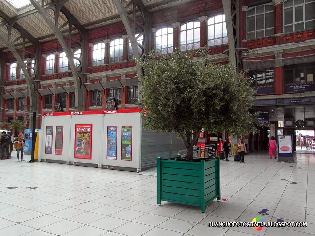 Un olivo en Lille