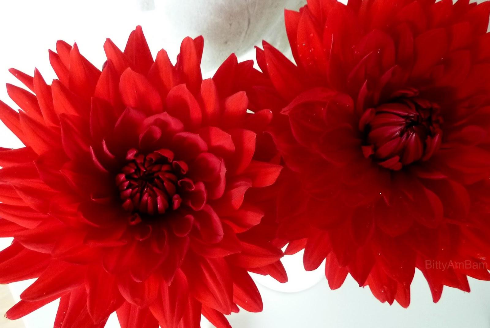 Welche Blumen Blühen Im September bittyambam september 2015