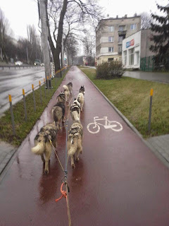 psie zaprzegi