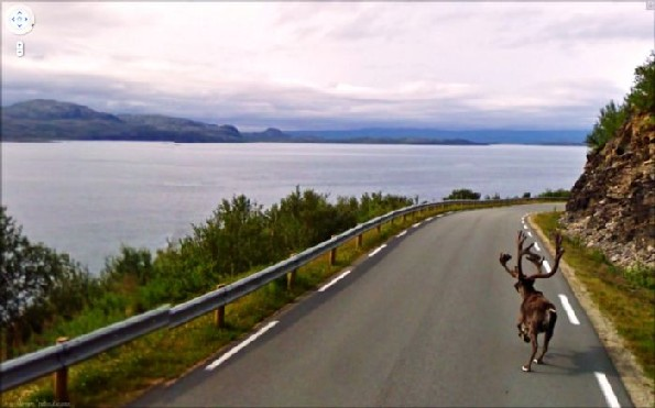 maps google alce atravessando estrada