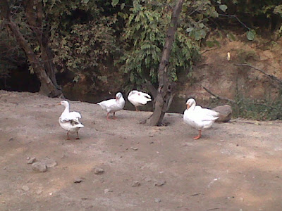 Water Birds in Delhi Zoo