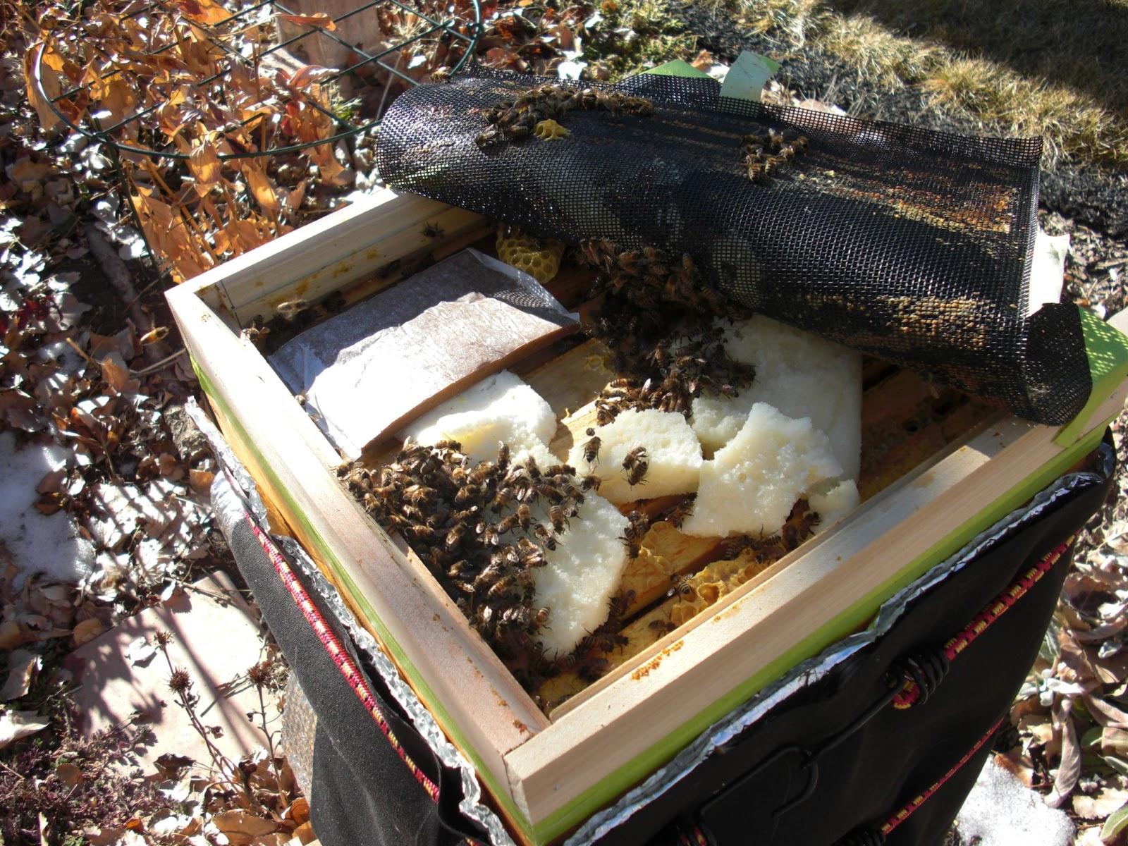 backyard bee hive blog january 2013
