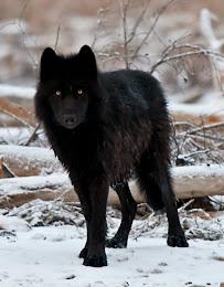 Raiden--Female--Hunter/Figher ~Kio