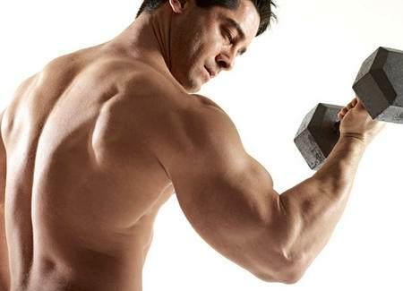 Best Exercise Fat Loss : Fitness Equipment Vibratec Vb500 Vibration Plate Evaluation