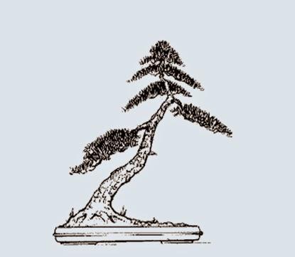 http://evoluzionebonsai.blogspot.it/2015/02/stili-bonsai-shakan-inclinato.html