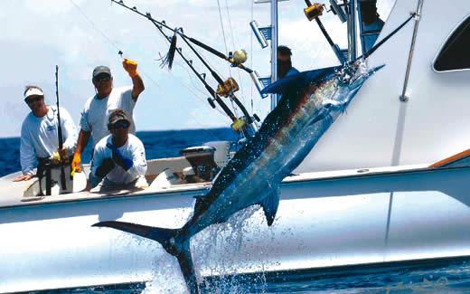 Deep sea fishing miami beach miami beach deep sea fishing for Bimini fishing charters