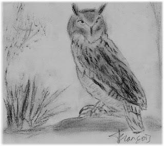 Búho real (Bubo bubo) Eurasian Eagle-Owl. Carboncillo/charcoal