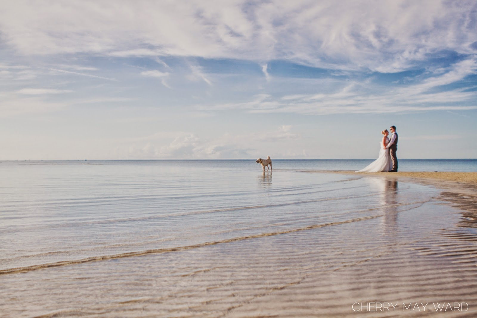 bride and groom standing on sandbar with dog looking out to sea, beautiful photos of bride and groom with a puppy, cute dog in wedding pictures, trash the dress on Koh Samui
