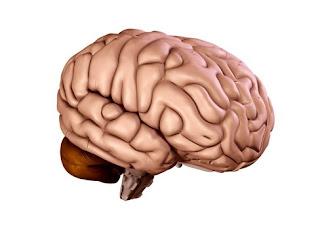 10 Misteri Otak Manusia Yang Belum Terpecahkan [ www.BlogApaAja.com ]