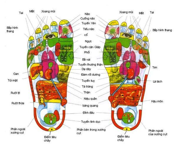 Đệm mát xa 8 bi Shachu Hàn Quốc, Máy massage bắp chân Nhật Bản cao cấp thế hệ mới nhất, hàng chính hãng 100% giá khuyến mại
