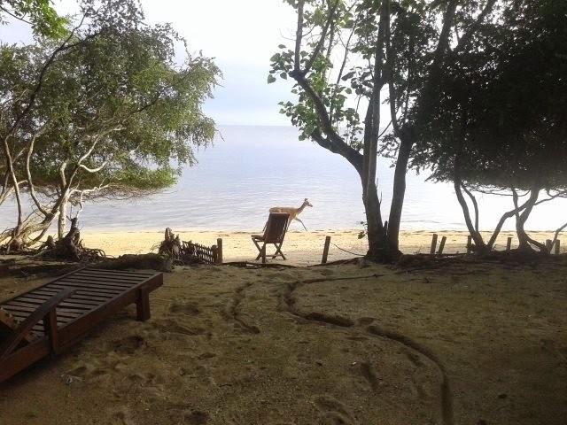Deer roam in Menjangan Island, Bali Indonesia