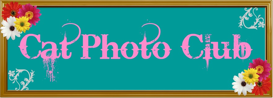 Cat Photo Club