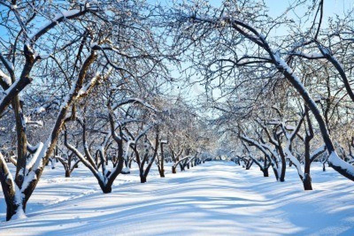 Cuaderno de poes a jardin de invierno for Jardines de invierno fotos