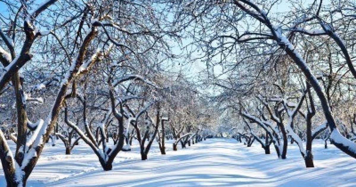 Cuaderno de poes a jardin de invierno for Jardines de invierno cerramientos