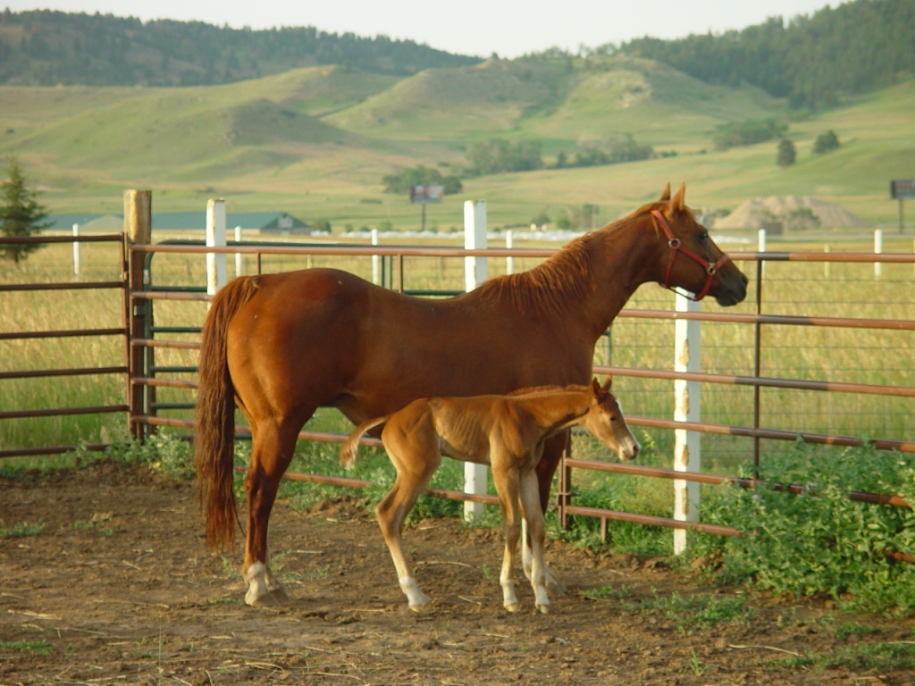 Mom and newborn colt photo by Lee Alley Real Estate