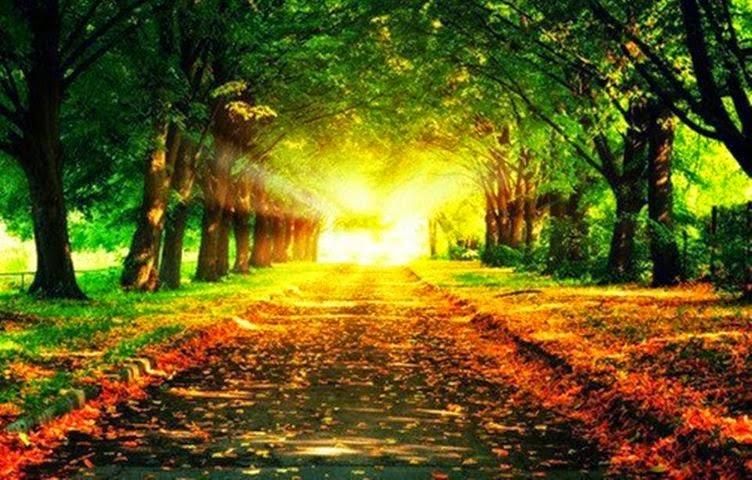 Nessa estrada quero topar com luz, desapego e paz...
