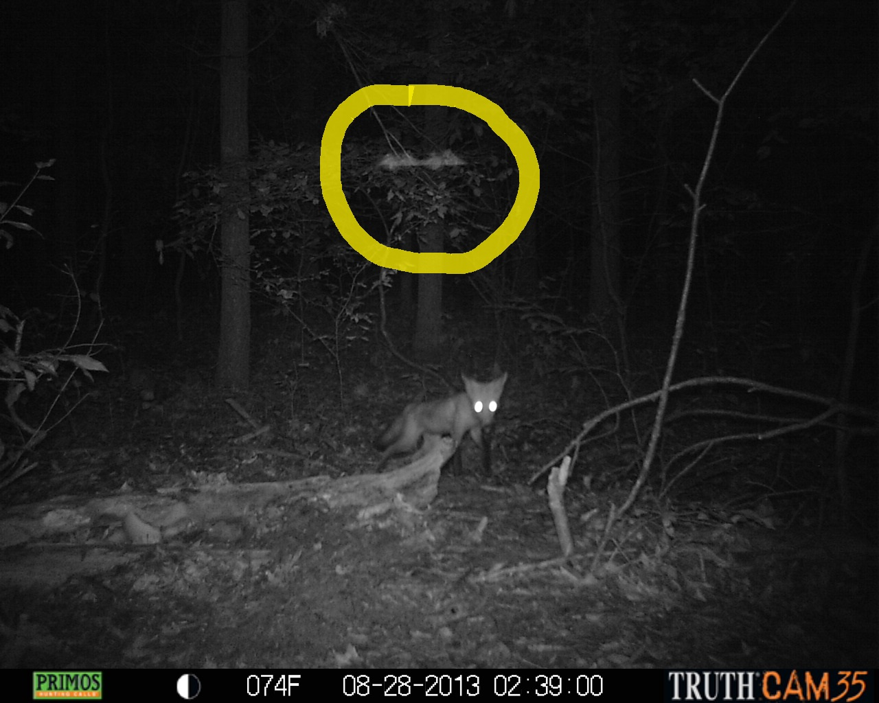 Plants Amaze Me: What's on the trail? Trail Camera Mystery! Scary Deer Cam Pictures