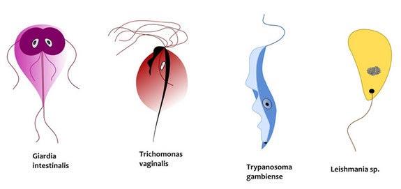 Penyebab Terjangkit Penyakit Kelamin (PMS)