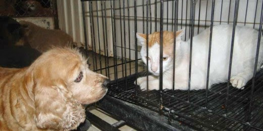 España-prohibir-venta-perros-gatos