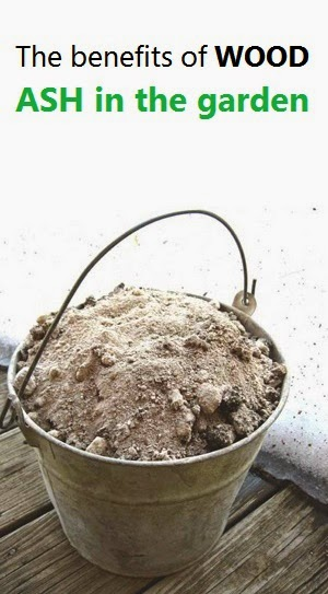 The Benefits Of Wood Ash In The Garden Alternative