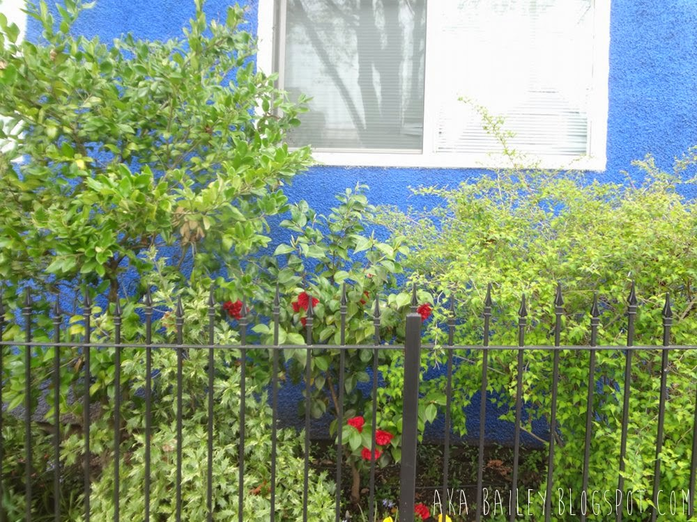 Gorgeous blue house with bright green bushes and red roses