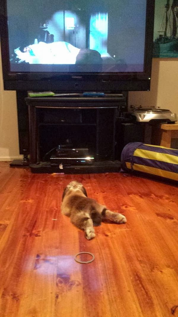 Funny animals of the week - 21 February 2014 (40 pics), bunny watching television