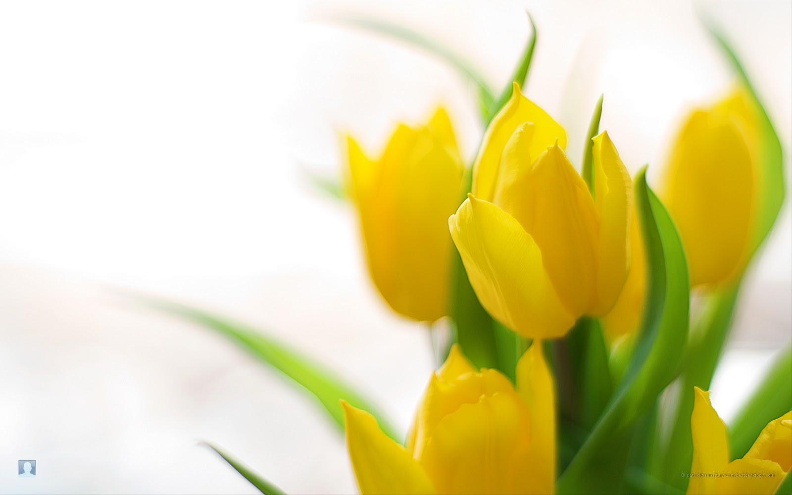http://2.bp.blogspot.com/-PyYdu7mKank/TvNX8AZtPKI/AAAAAAAAEDw/526HADB63Jw/s1600/spring-flowers-5.jpg