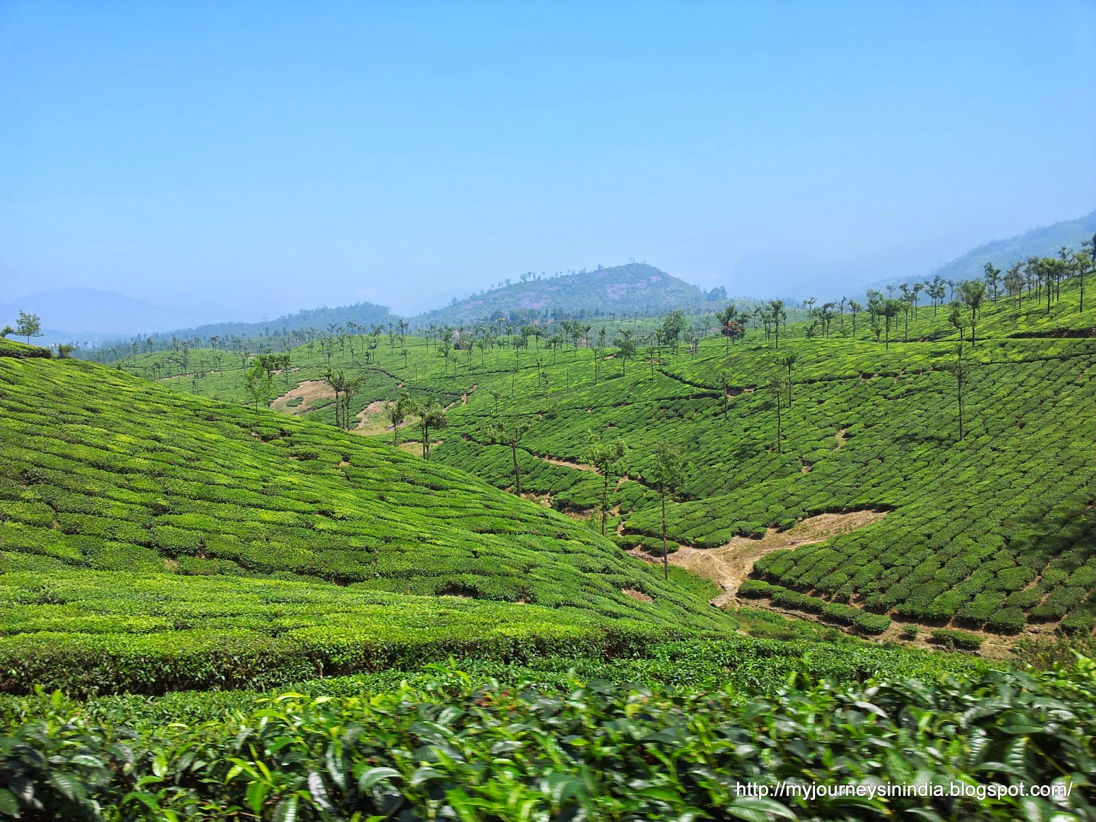 Valparai Tea estate