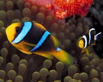 Underwater, life, marine animals, animals, amazing, world, amazing photos, beach nature picture, best photos of nature, nature around, nature photographers, nature wallpaper download, underwater