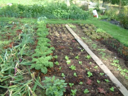 Funny wallpapers vegetable gardens vegetable gardening for Vegetable garden