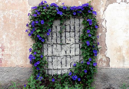 Ver Fotos De Flores Violetas - al por mayor foto de flor violeta AliExpress en español